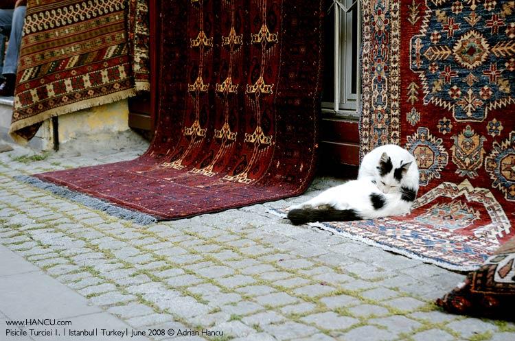 grandoman_cats_istanbul_5327933555