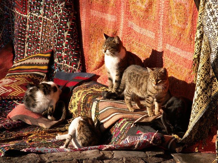 grandoman_cats_istanbul_532793570oqSQaN_fs