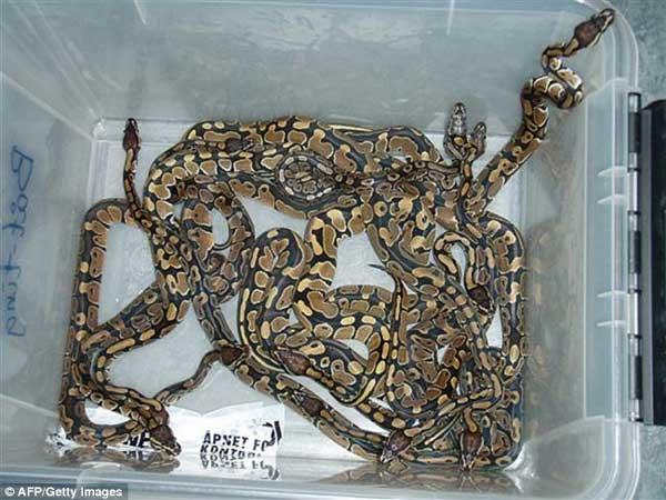 grandoman_reptilesmug_4