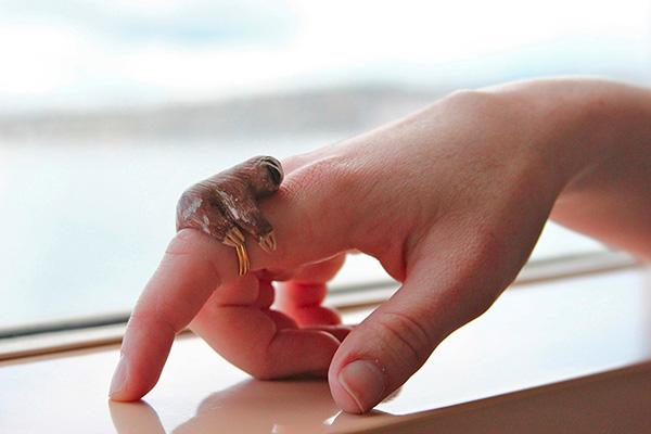 Ленивец по пръстите (1)