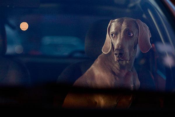 Кучета в коли (10)