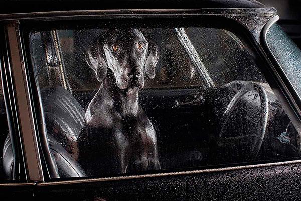 Кучета в коли (5)