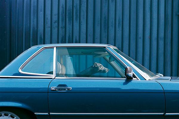 Кучета в коли (12)