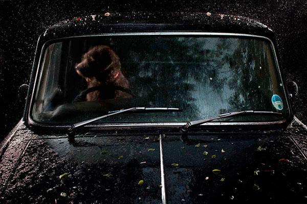 Кучета в коли (2)