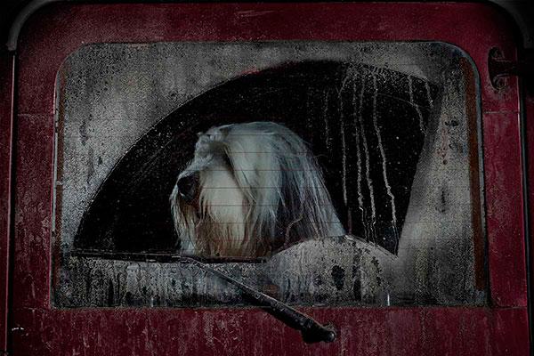 Кучета в коли (17)