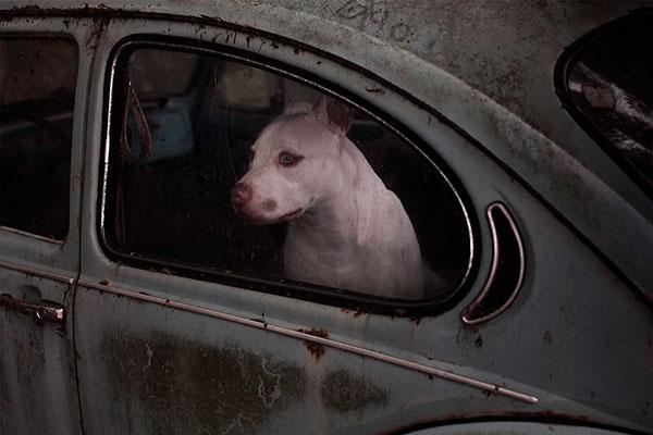Кучета в коли (6)