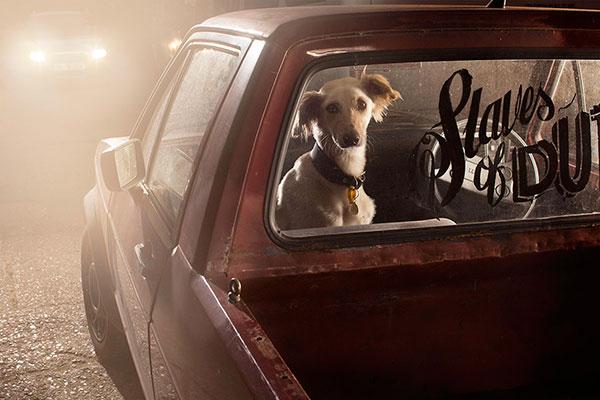Кучета в коли (15)