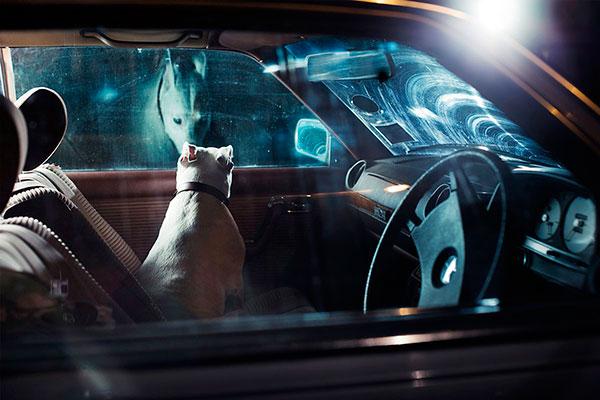 Кучета в коли (14)