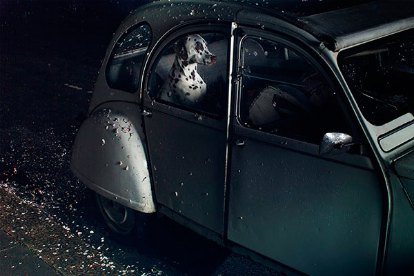 Кучета в коли (13)