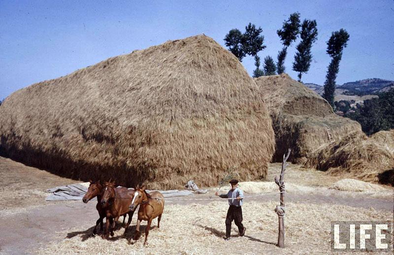 България, 1961 г. (11)