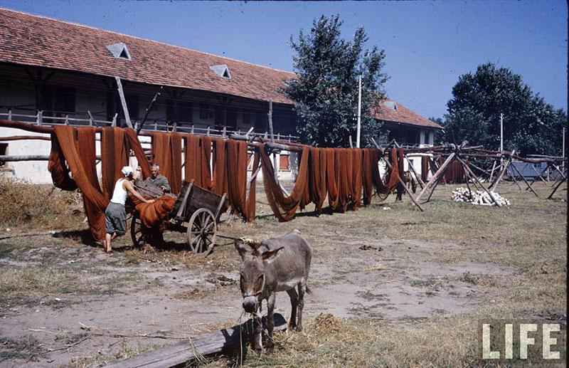 България, 1961 г. (19)